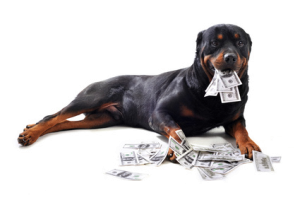 Hund_geld